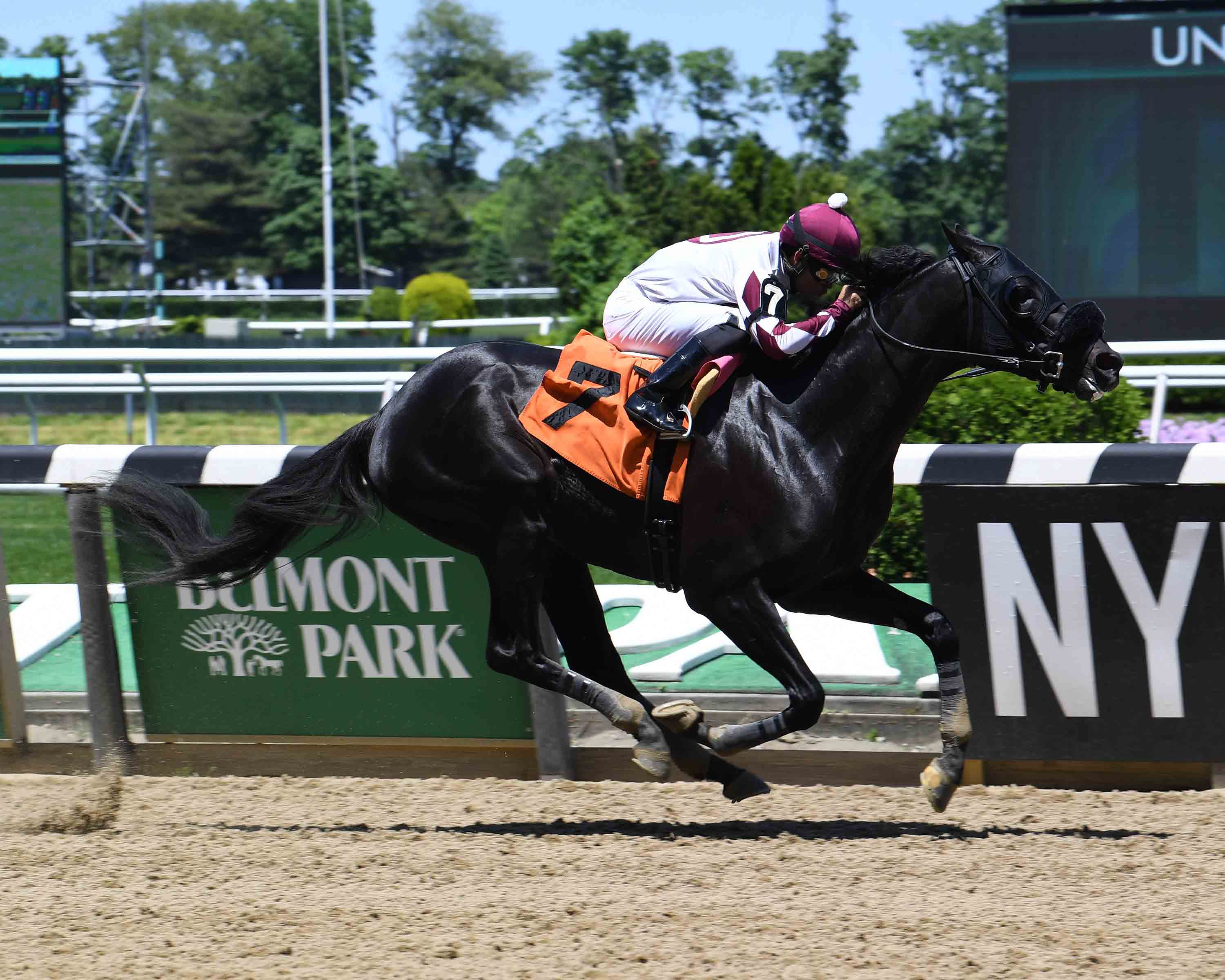 Bill Heller's New York-Breds at the Races: May 25 to 31
