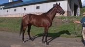 Zivo - Irish Hill and Dutchess Views Stallions
