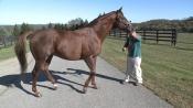 Heavy Breathing - Irish Hill and Dutchess Views Stallions