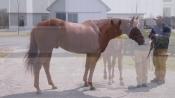 Union Jackson - Sequel Stallions New York