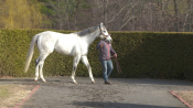 Disco Partner - Rockridge Stud