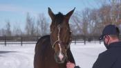 Honest Mischief - Sequel Stallions New York