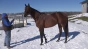 King for a Day - Irish Hill & Dutchess Views Stallions