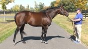 Forty Tales - McMahon of Saratoga Thoroughbreds
